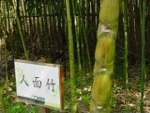 里報.tw-竹藝文化園區