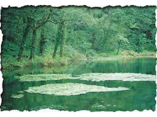 里報.tw-福山植物園