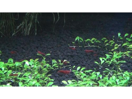 里報.tw-農業生物科技園區「亞太水族中心」