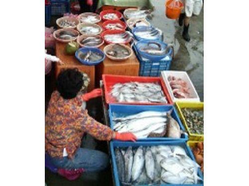 里報.tw-大溪漁港