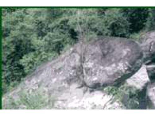 里報.tw-青蛙石