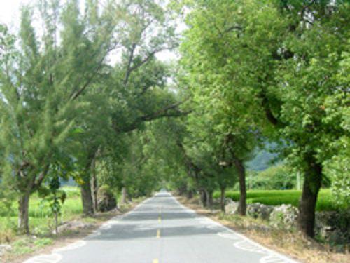 里報.tw-瑞豐樟樹綠色隧道