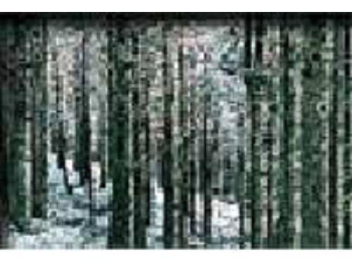 里報.tw-東眼山國家森林遊樂區