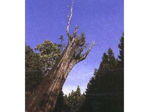里報.tw-阿里山國家森林遊樂區