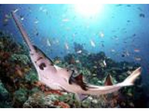 里報.tw-海洋生物教育館