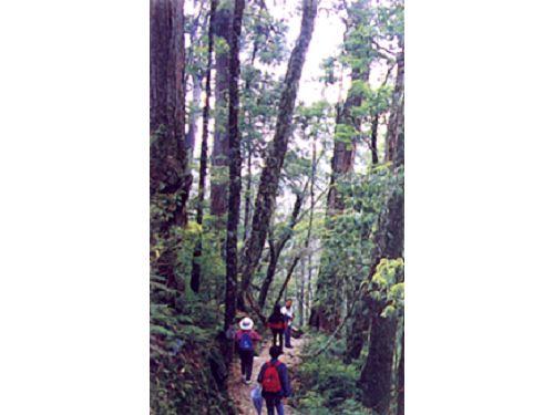 里報.tw-大雪山國家森林遊樂區