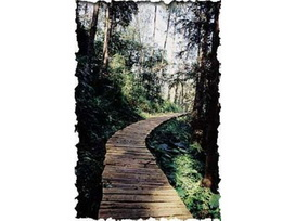 扇平森林遊樂區