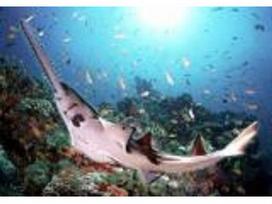 海洋生物教育館