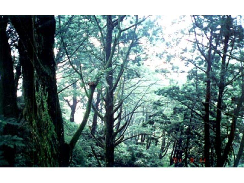 里報.tw-肖楠巨木群
