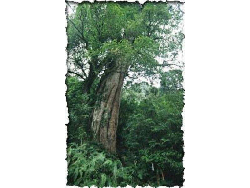 里報.tw-中國歷代神木園區