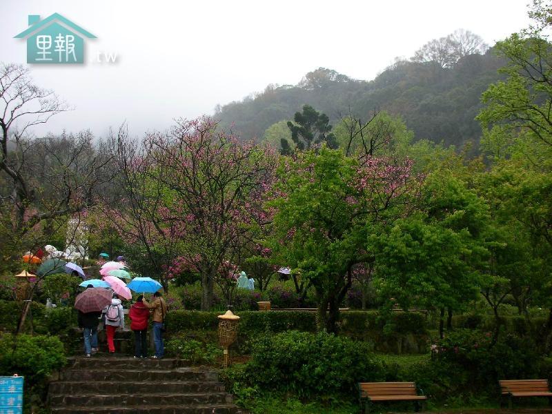里報.tw-陽明山花季