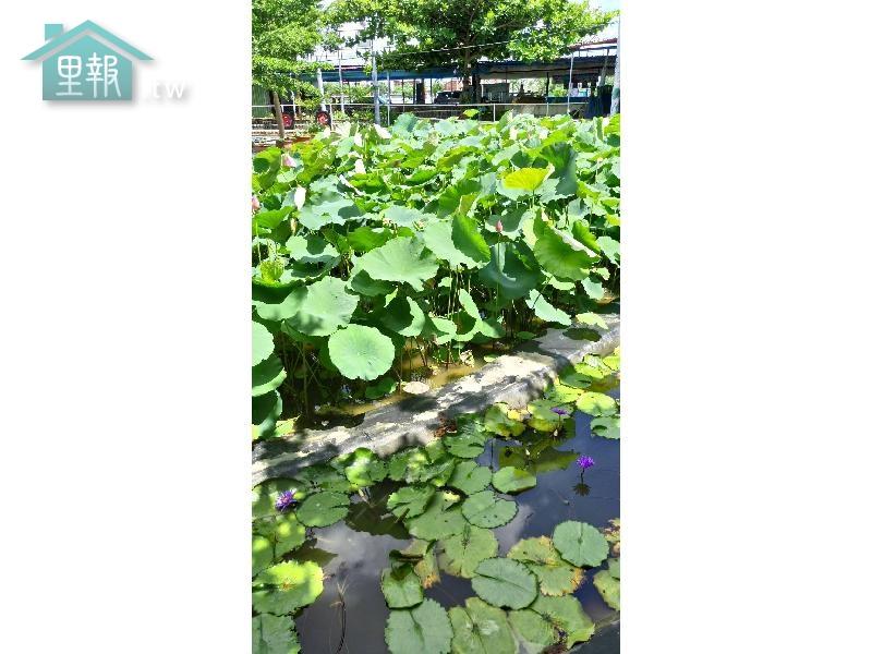 里報.tw-蓮合國白河休閒園區