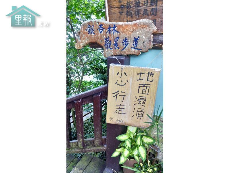 里報.tw-銀杏林觀景步道
